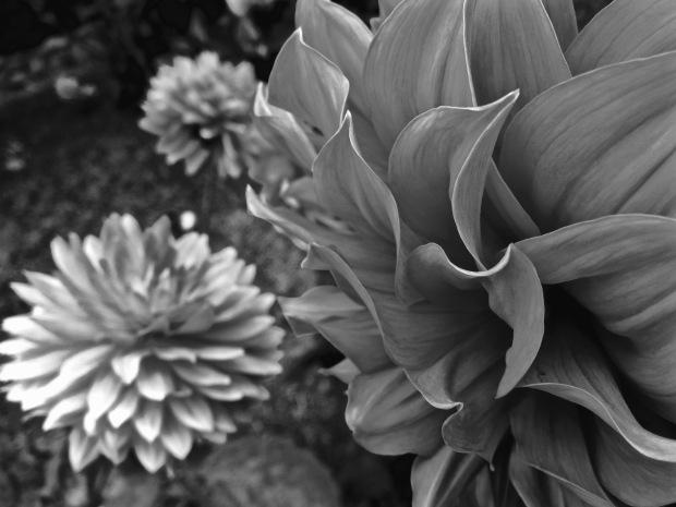 Fractals by Aloha Lavina 2012